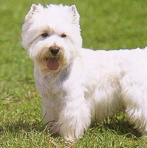 テリア - かわいい犬のWIKI
